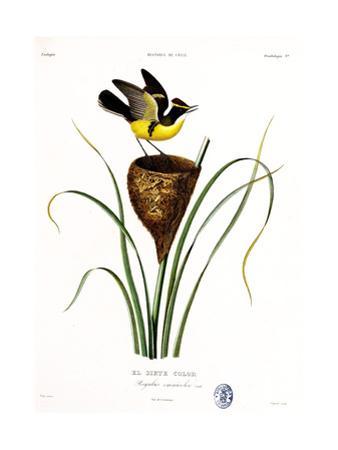 El Siete Color, Atlas de La Historia Física y Política de Chile, 1854