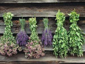 Herbs Drying Upside Down by Clay Perry