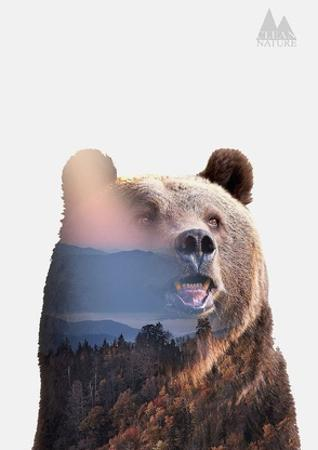 Bear by Clean Nature