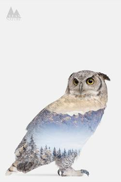 Snow Owl I by Clean Nature