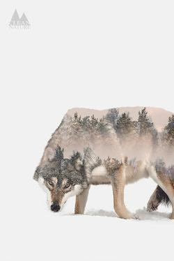 Wulf by Clean Nature