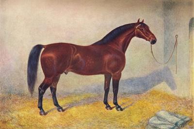 https://imgc.allpostersimages.com/img/posters/cleveland-bay-stallion-sultan-c1902-c1910_u-L-Q1EFLWL0.jpg?artPerspective=n