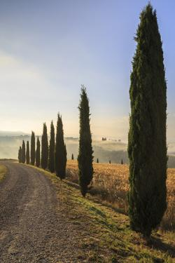 A typical street in Tuscany,with cypresses and in the background the chapel of Vitaleta. Val d'orci by ClickAlps