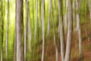 Beech Trees, Sibillini National Park, Umbria, Italy by ClickAlps