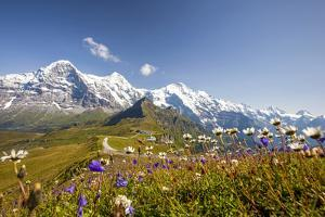 Colorful flowers framing Mount Eiger Mannlichen Grindelwald Bernese Oberland Canton of Berne Switze by ClickAlps