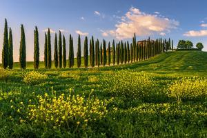 Europe. Italy. Tuscany. Siena District. Orcia Valley. Covili farmhouse at sunset by ClickAlps