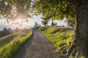 Europe, Slovenia. The road leading to the Church of St Primus and Felician in Jamnik at sunrise by ClickAlps