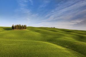 Iconic Cypresses in Torrenieri Country, Orcia Valley, Tuscany, Italy by ClickAlps