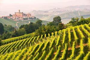 Italy, Piedmont,Cuneo district, Langhe, Castiglione Falletto, the vineyards and the castle of Casti by ClickAlps