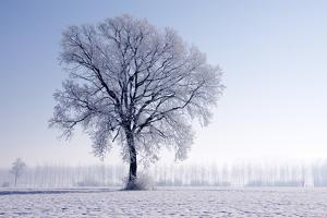 Plain Piedmont, Piedmont, Italy. Hoar Frost Trees by ClickAlps
