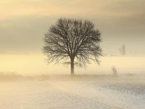 Po Valley, Piedmont, Italy. Piedmont countryside in winter in a cold and foggy morning. by ClickAlps