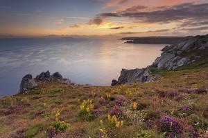 Pointe Du Van, Brittany, France. Blooms on Pointe Du Van Cliffs by ClickAlps