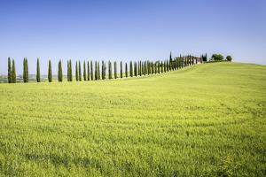 Road with Cypresses and Farmhouse. Orcia Valley, Siena District, Tuscany, Italy. by ClickAlps