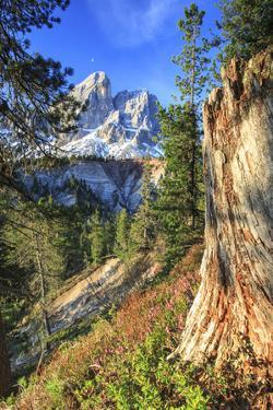 Sass de Putia in background enriched by colorful woods. Passo delle Erbe. Puez Odle South Tyrol Dol by ClickAlps
