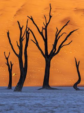 Sunrise from the Deadvlei, Sossusvlei, Namibia. by ClickAlps