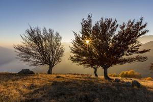 Three beech trees at sunset with Lake Como on the background. Alto Lario, Como, Lombardy, Italy, Eu by ClickAlps