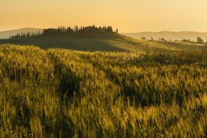 Tuscany hills at sunrise, Val d'Orcia, Tuscany,Italy. by ClickAlps