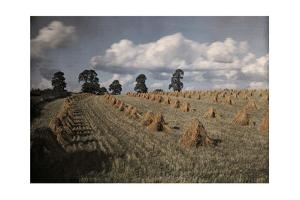 A View of a Wheat Field with Stacked Sheaves Near Oxford by Clifton R. Adams