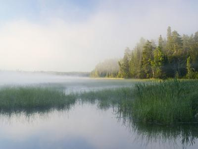 Lake Itaska, the Headwaters of the Mississippi River, Itaska State Park, Minnesota, USA
