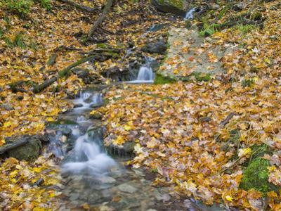 Small Stream with Fall Leaves, Malanaphy Springs State Preserve, Winneshiek County, Iowa, USA