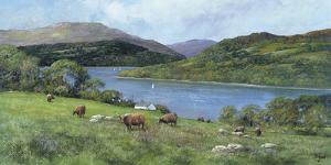 Highland Cattle by Clive Madgwick