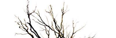 Branches on White Background by Clive Nolan