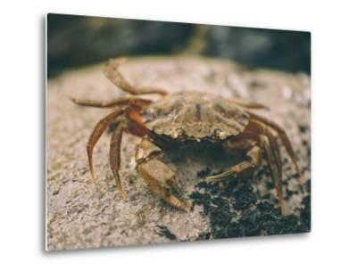 Crab at Seaside