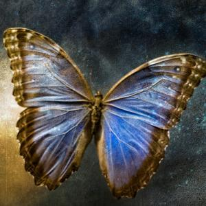 Creative Image of a Mounted Exotic Butterfly by Clive Nolan