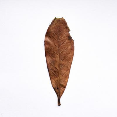 Decaying Leaf