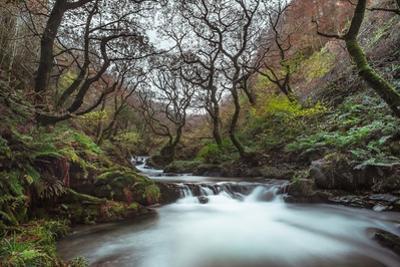 Stream Flowing Through Woodland in England