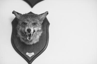 Stuffed Fox Head by Clive Nolan