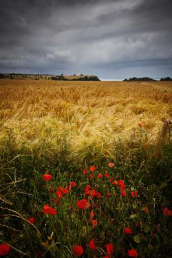 Poppies, Hay Field, Sea by Clive Rees Photography