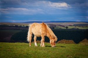 Welsh Mountain Pony by Clive Rees Photography