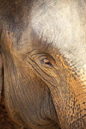 https://imgc.allpostersimages.com/img/posters/close-up-of-a-adult-elephant-s-elephantidae-eye-and-crinkled-skin_u-L-PQ8LZB0.jpg?p=0