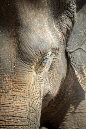 https://imgc.allpostersimages.com/img/posters/close-up-of-a-adult-elephant-s-elephantidae-head-and-crinkled-skin_u-L-PQ8PCZ0.jpg?p=0