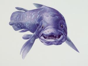 Close-Up of a Coelacanth