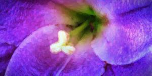 Close-up of a purple flower, Oregon, USA