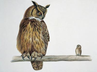Close-Up of an Eurasian Eagle Owl (Bubo Bubo) Perching on a Branch with an Eurasian Pygmy Owl