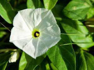 Close-Up of Blooming Tropical White Flower
