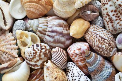 https://imgc.allpostersimages.com/img/posters/close-up-of-collection-of-sea-shells-washington-usa_u-L-PN73B10.jpg?p=0