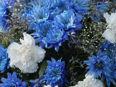 Close-up of Colorful Blue and White Flowers with Baby's Breath