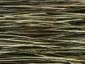 Close-up of Dark Paintbrush Bristles