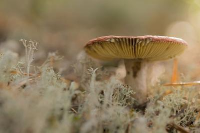 https://imgc.allpostersimages.com/img/posters/close-up-of-mushroom-lichen-on-a-foreground_u-L-Q1EXQWH0.jpg?artPerspective=n