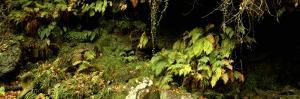 Close-up of Plants, Eller Beck, Goathland, North Yorkshire, England, United Kingdom