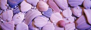 Close-up of Sea Shells