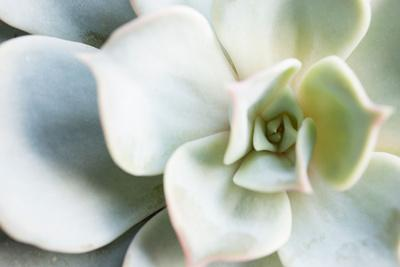 https://imgc.allpostersimages.com/img/posters/close-up-of-succulent-plant_u-L-Q1F017I0.jpg?artPerspective=n