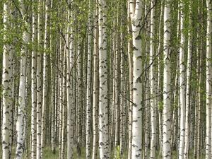 Close-up of Trees