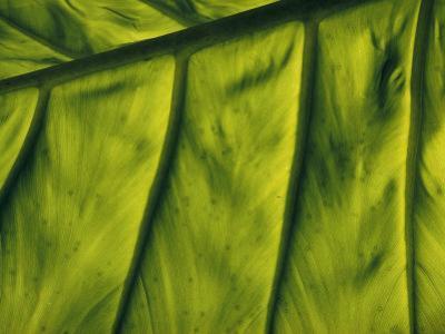 Close View of a Leaf