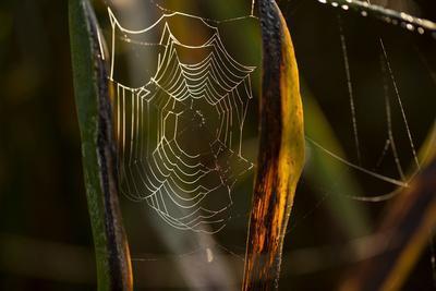 https://imgc.allpostersimages.com/img/posters/closeup-of-shiny-cobweb-with-dew-dark-background_u-L-Q1EXX4L0.jpg?artPerspective=n
