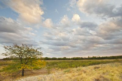 https://imgc.allpostersimages.com/img/posters/clouds-over-the-prairie-at-sunset-texas-usa_u-L-PN6U8Q0.jpg?p=0